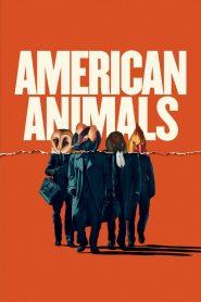 Zwierzęta Ameryki