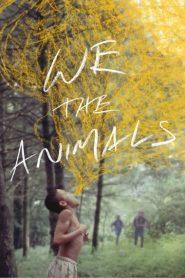 My, zwierzęta